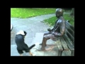 Dog Wants Statue to Play Fetch