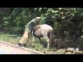 Falls and falls funny videos funny Chistosos 2014